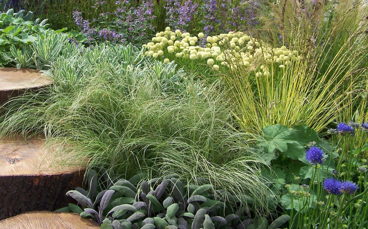 Ornamental grasses sharon hockenhull for Purple grasses for landscaping